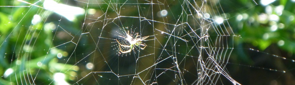 cropped-2013-0614-spider-in-web