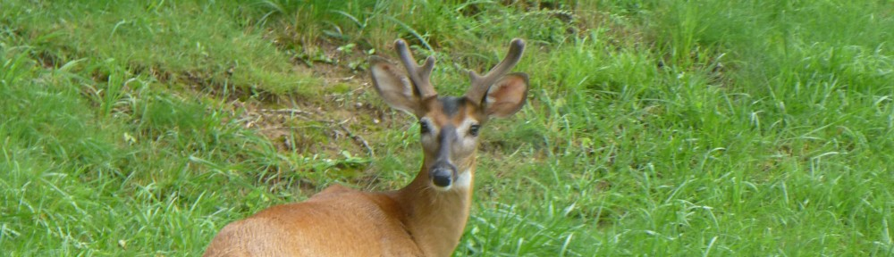 cropped-2013-0714-buck