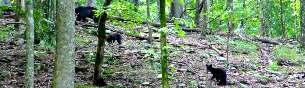 cropped-2013-0721-bear-cubs