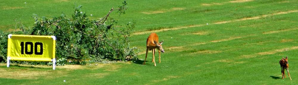 cropped-2013-0721-deer-driving-range-2