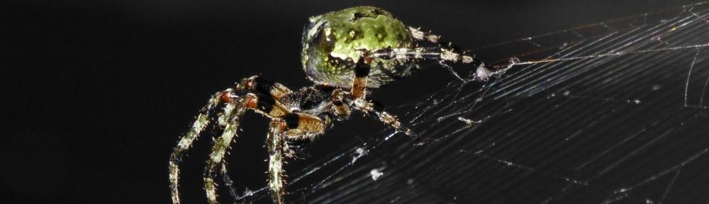 cropped-2013-0814-orb-weaver-spider