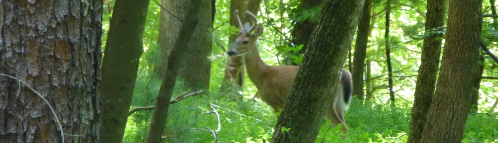 cropped-2013-0829-buck-hiking-trail