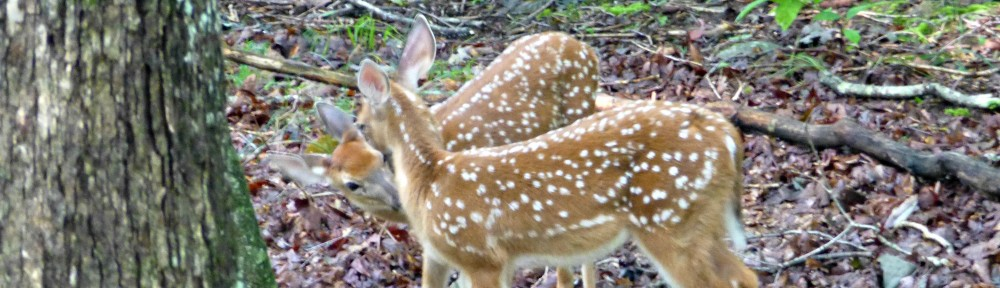 cropped-2013-0901-twin-fawns