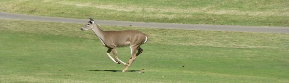 cropped-2013-1012-deer-running-hole-5