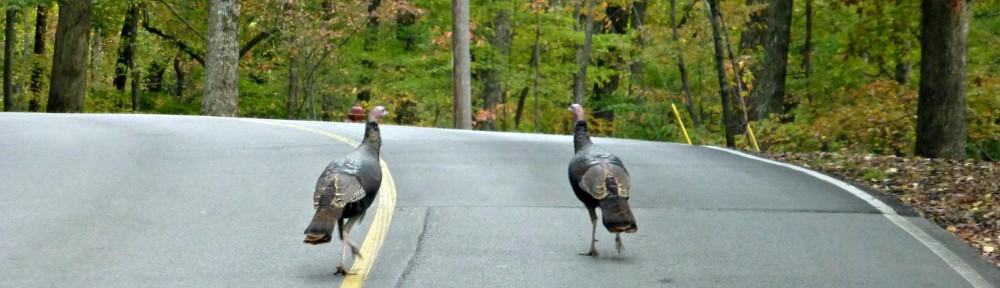 cropped-2013-1026-turkey-road