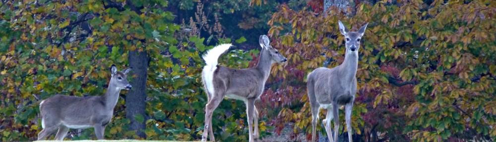 cropped-2013-1103-three-deer
