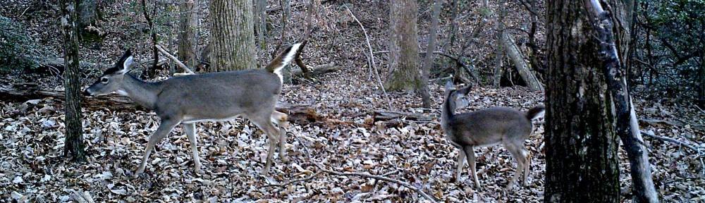 cropped-2013-1124-deer-trailcamx