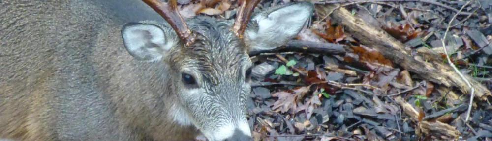 cropped-2013-1209-rain-buck