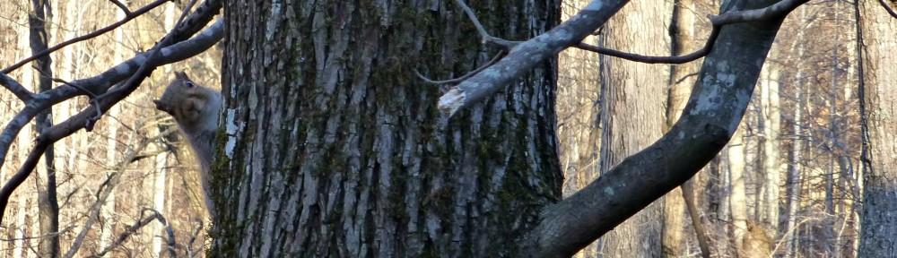 cropped-2013-1218-crazy-squirrel