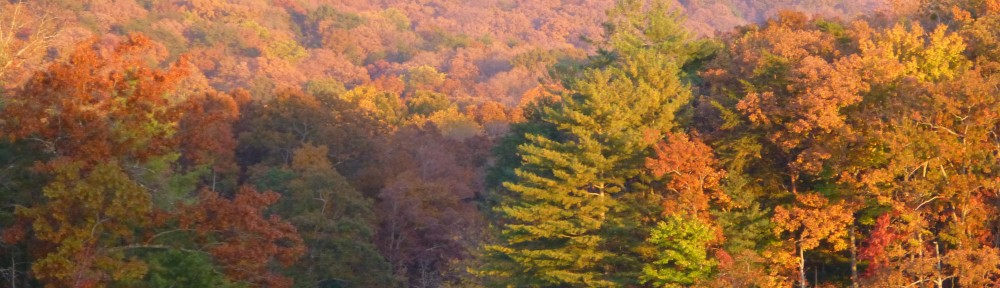 cropped-2013-lake-tamarack-fall-leaves