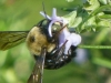 cropped-2013-0415-bee-horse-park