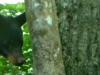 cropped-2013-0614-bear-2