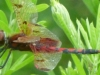 cropped-2013-07-dragonfly
