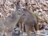 2015-0119-deer-creek.jpg