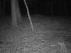2015-0129-deer-night-1000x288.jpg