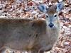 2015-0205-doe-deer-1000x288.jpg