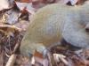 2015-0209-squirrel-burying-nut-1000x288.jpg