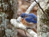 2015-0220-puffy-bluebird-header-1000x288.jpg
