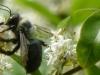 2015-0516-bee-privet-1000x288.jpg