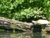 2015-0522-turtle-log-hole-11-1000x288.jpg