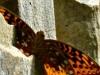 2015-0525-butterfly-1000x288.jpg