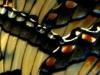2015-0722-butterflies-mudpuddling-x-1000x288.jpg