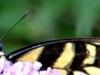 2015-0724-butterfly-macro-header-1000x288.jpg