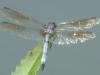 2015-0804-dragonfly-1000x288.jpg