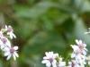 2015-0831 wildflowers.jpg