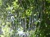 2015-0913 spiderweb.jpg