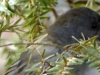 cropped-2016-0217-dark-eyed-junco-header-1000x288.jpg