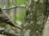 cropped-2016-0410-bird-bug-header-1000x288.jpg