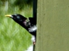 cropped-2016-0423-starling-header-1000x288.jpg