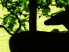 cropped-2016-0620-doe-silhouette-1000x288.jpg