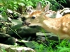 cropped-2016-0806-fawn-denny-ridge-trail-header-1000x288.jpg
