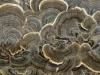 2012 0916 cool fungus.JPG