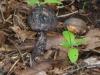 P1500186 2013 0711 black mushroom.JPG