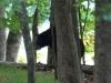 2014-0830-bear