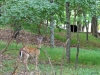 2014-0830-deer-bear