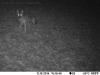 2014-1118-coyote-2