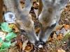 2014-1029-deer-mushrooms-2