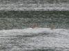 P1220987 2018 0628 doe fawn lake.JPG