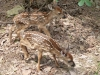 2012-0626-newborn-twin-fawns-3