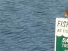 2011-0813-bluebird-fishing-rules-header