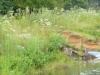 2011-0908-spillway-header