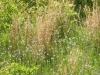 2012-0403-understory-header