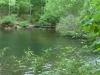2012-0416-trail-pond-header