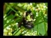 2012-0429-bee-bouquet-header