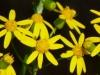 2012-0429-yellow-wildflowers-header