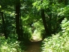 2012-0603-trail-understory-header